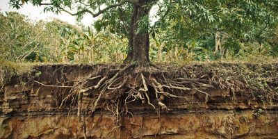 Your Roots & King Jesus